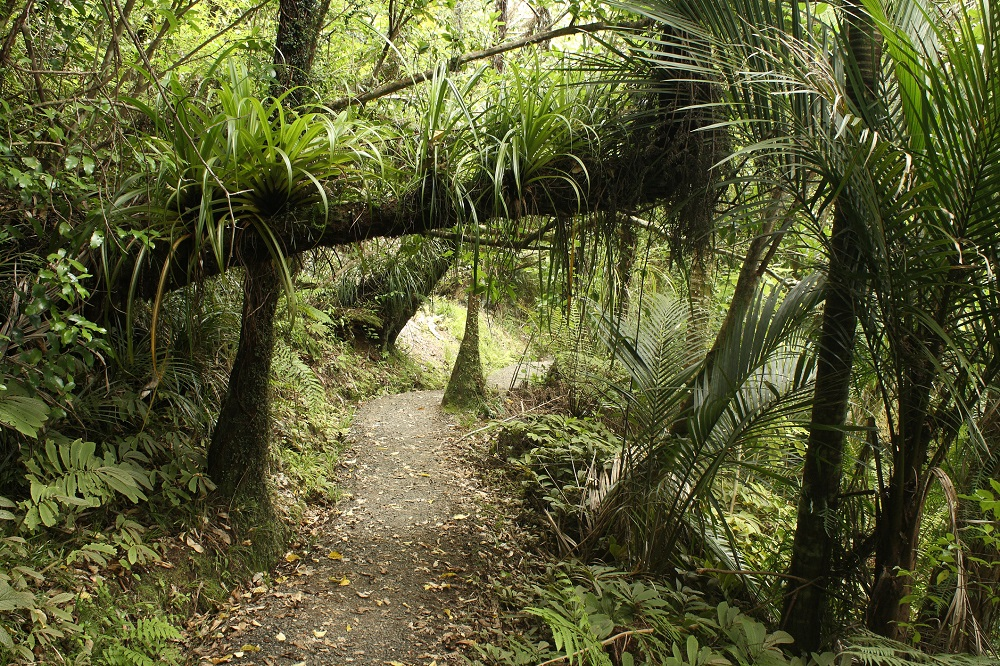 Walking trail in the Waitakere Ranges