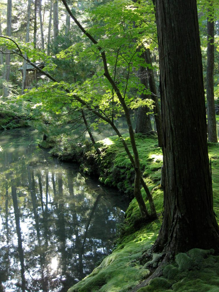 moss grows on the banks of Golden Pond at Saiho-ji