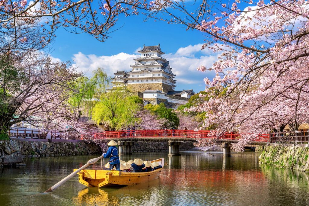 Himeji castle in the background with group sailing under the cherry blossoms in spring