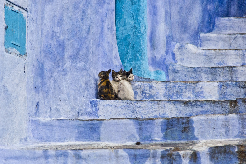 kittens near blue wall of chefchaouen