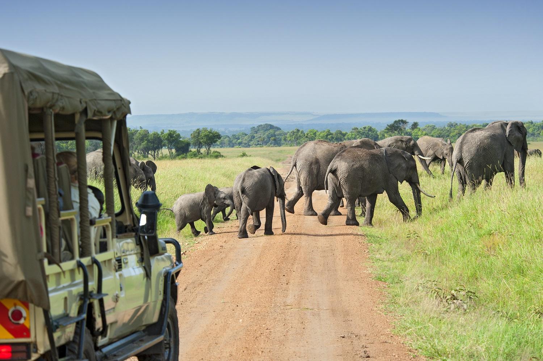 Elephants crossing the road during safari